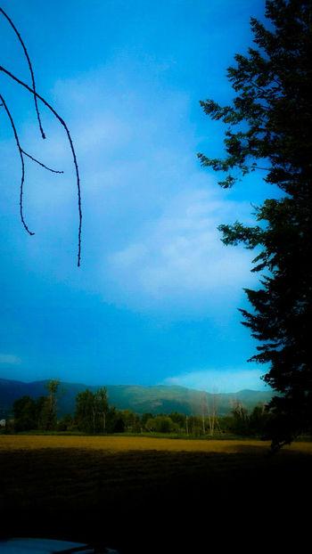 Taking Photos Enjoying Life Kalispell Montana Rocky Mountains Photography Trees