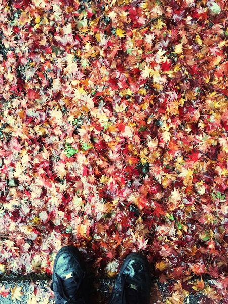 延暦寺の落ち葉での一枚! 落ち葉 延暦寺 #japan Autumn Leaf Change Shoe Low Section Human Leg Colour Your Horizn Standing Nature Human Foot One Person Day Red Beauty In Nature