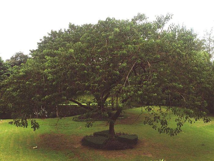 🌿 Tb Tree And Sky 🌳