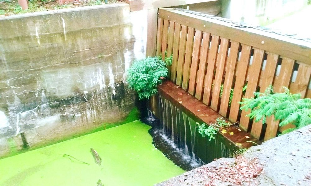 Canal Green Water Flow Nature Man-made Trishann Artlovelaughter