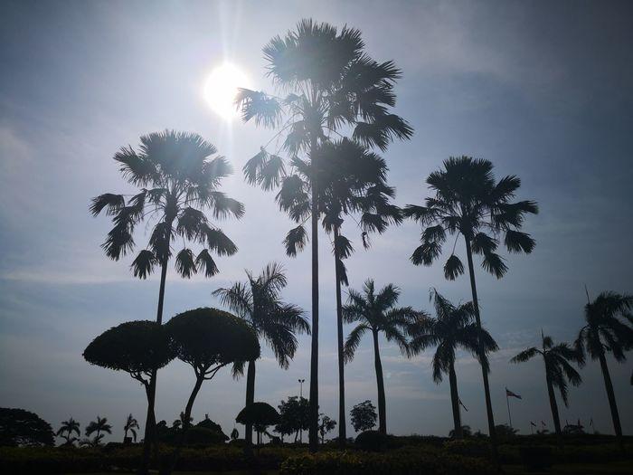 Hot sun Sun Tree Silhouette Palm Tree Sky Cloud - Sky