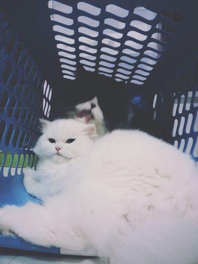Cats Cat Cute Pets Catcatcat