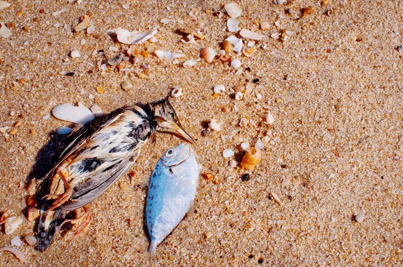 EyeEm Selects Death bodies of fish and bird on the sand Beach Sand Nature Ecology Ecology Problem Destroys Nature Destroy Pollution Water Pollution Bird Fish Death Body Corpse Died Animal Marine Life Zoology Biology Ichthyology Ornithologist Toxic Poison Disease Plague