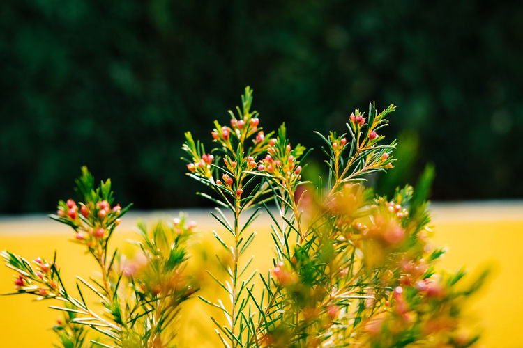 Plant Growth Beauty In Nature Freshness Flowering Plant Selective Focus Flower Close-up Vulnerability  Nature Fragility No People Yellow Focus On Foreground Day Outdoors Flower Head Green Color Sunlight Inflorescence