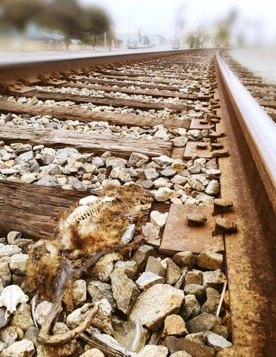 Didn't quite make it Railroad Tracks Roadkill Meow Skeleton Dead Animal Watch Your Step Grisly