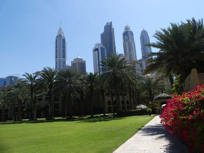 Surreal view of Skyscrapers from the One & Only Hotel Gardens, Dubai, United Arab Emirates 2019 Dubai UAE 2019 One & Only Hotel Palm Trees Blue Sky Sunlight And Shade No People Skyscrapers Grass Park Cityscape Gardens Flowering Bushes Surreal Tall - High Tower Blocks Towers Nature Natural Beauty Composition Outdoor Photography Modern Architecture Lawn City