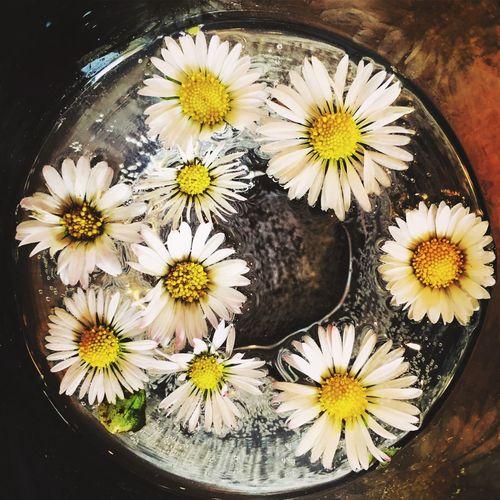 Spring joys