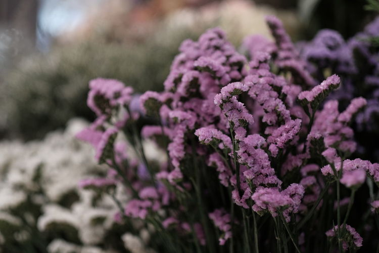 Flower background Flower Flowering Plant Plant Beauty In Nature Freshness Growth Vulnerability  Fragility Close-up Focus On Foreground Purple Day Nature Pink Color No People Petal Selective Focus Flower Head Inflorescence Outdoors Lilac Bunch Of Flowers