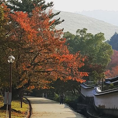 Autumn Leaves Autumn🍁🍁🍁 Autumn Colours Autumn 2017 Autumn In Japan Autumn Tree No People Outdoors Change Day Leaf Nature Water Beauty In Nature Sky