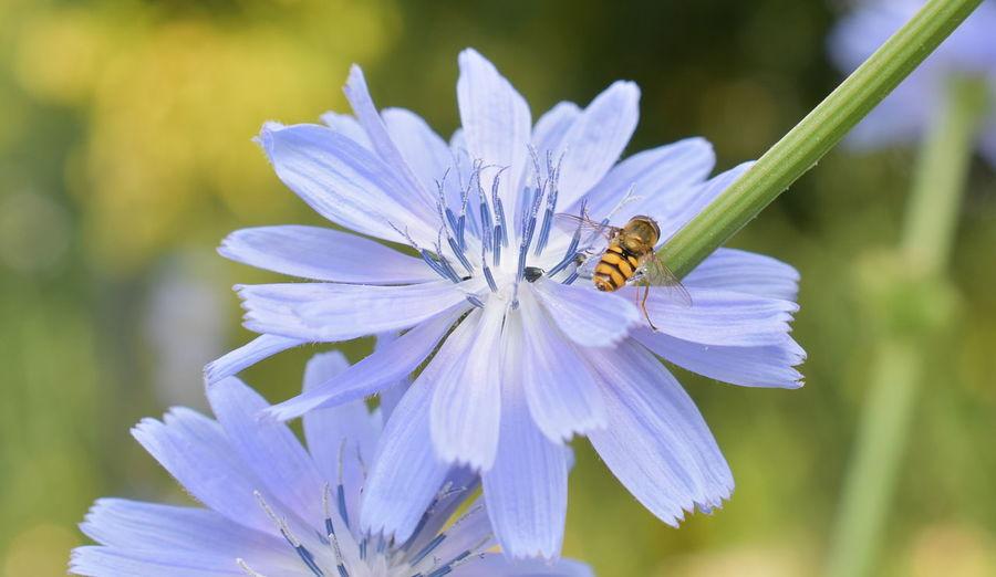 Wasp Portrait