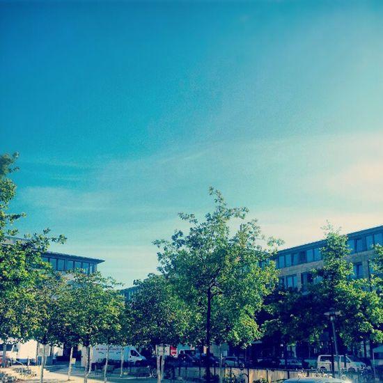 good morning Dresden #good #morning #dresden #sun #sunrise #sunset #sky #blue #green #tree #instagram #instamood #magic #instagood #bestshot #ink361 #ig #jj #igers #picoftheday #photooftheday Tree Magic Blue Dresden Photooftheday Instagram Picoftheday Good Instamood Sun Ig Sunset Bestshot Morning Igers Sunrise Jj  Sky Instagood Ink361 Green