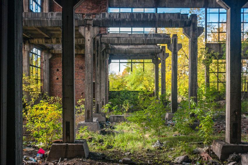 Abandoned Plant Industrial Decay Plants Nature Triumph Novokuznetsk Kuzbass Siberia Russia