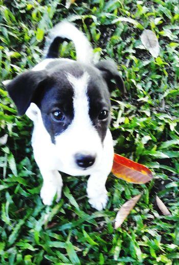 Unlikely Heroes RIP puppy.. 'HERO' 'BESTFRIEND' 'FAMILY' Unlikely Heroes.