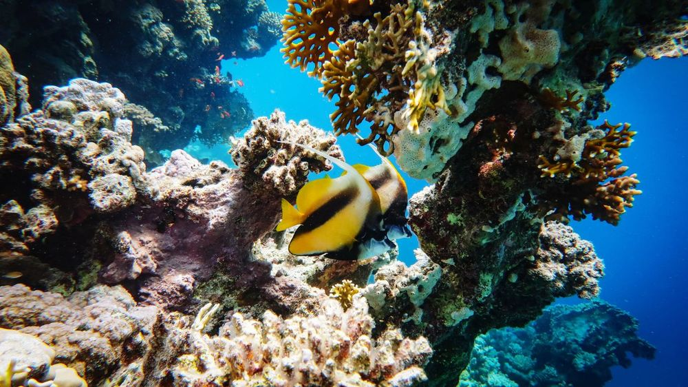 Underwater UnderSea Sea Sea Life Animals In The Wild Water Coral Animal Themes Nature Scuba Diving Animal Wildlife No People Blue Day Beauty In Nature Swimming Outdoors Close-up reef Reef Red Sea Red Sea Diving EgyptScubadiving SCUBA Underwater Photography