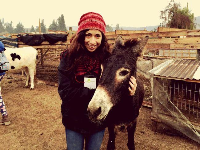 Picturing Individuality Burro Smile Santuario Limache Chile♥ Posandoparalapipul Happy Animals Vida Enjoying Life Cold Days Feliz Santuariotiaclafira Vregion Cute Cutepets