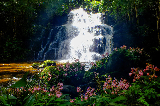 Mun dang waterfall 5th floor 1 Water Waterfall Nature Beauty Rock - Object Beauty In Nature Flower Summer Outdoors No People Motion Plant Scenics Landscape Day Vacations Freshness The Week On EyeEm EyeEmNewHere Wild Flowers Snapdragon Freshness Growth Beauty In Nature Nature