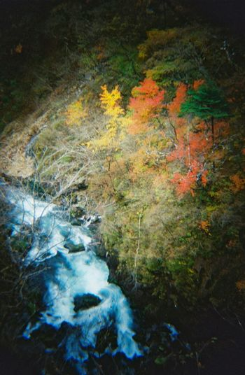 Kegon Falls Autumn2014 Autumn Autumn Leafs Autumn Colors Autumn Leaves Colors Of Autumn 35mm Film Film Nikko