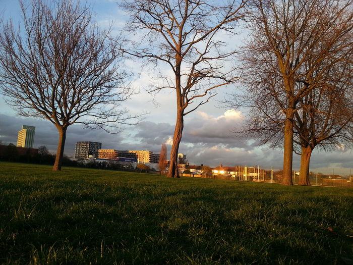 Tree Grass Sky