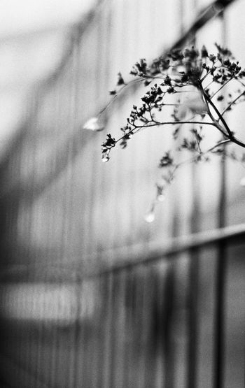 Analog Beauty In Nature Black And White Bokehlicious Branch Close-up Crying Drop Fence Flower Freshness Growth Infinity Lush Melancholy Nature Outdoors Rain Drops Reflection Sad