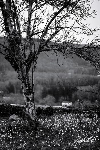 Midi Pyrénées Blackandwhite Tree Branch Nature Day Outdoors Focus On Foreground Bare Tree