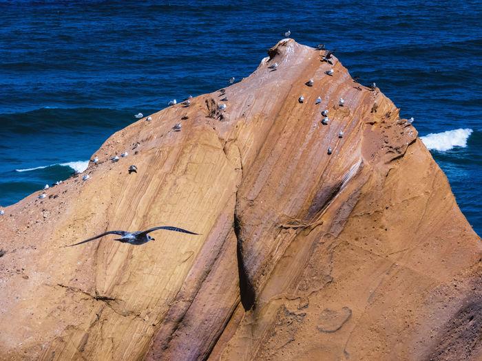 High angle view of lizard on beach