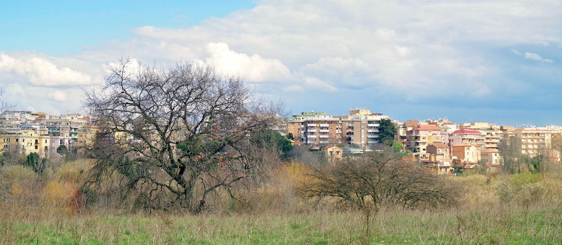 Bare tree on field by buildings against sky