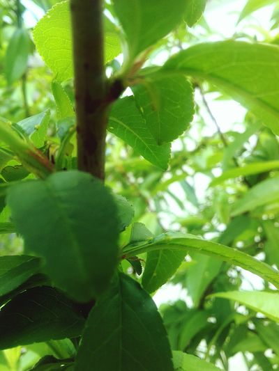 Tree Greenhouse Leaf Agriculture Defocused Flower Close-up Plant Green Color Food And Drink