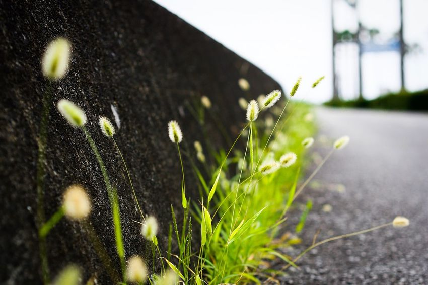 Growth Day Plant No People Outdoors Close-up Built Structure Grass Nature Building Exterior Architecture Freshness
