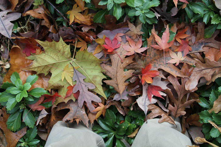 Fall Colors Autumn Day Deep Leaves Fall Leaves Feet In Leaves Leaf Leaves Nature No People Outdoors Plant Walking In Leaves
