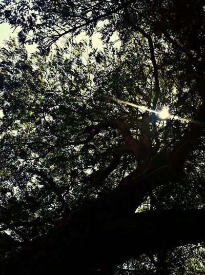 Hanging Out Sunshine Check This Out Trees Are Cool