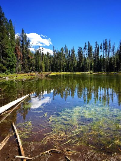 Water Reflection Tree Tranquil Scene Lake Blue Tranquility Scenics Beauty In Nature Nature Majestic Travel Destinations Growth Vacations Tourism Standing Water Calm Non-urban Scene Day Green Color