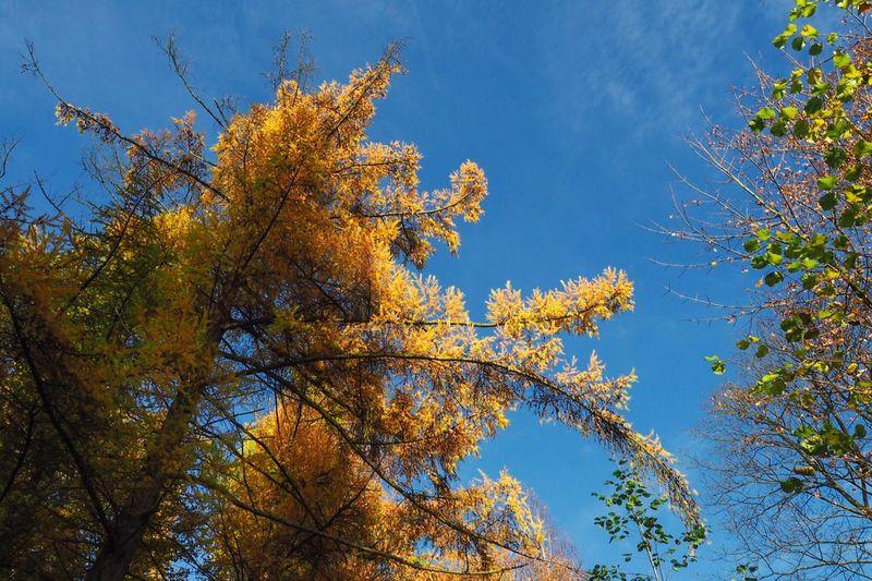 •yellowgreenblue