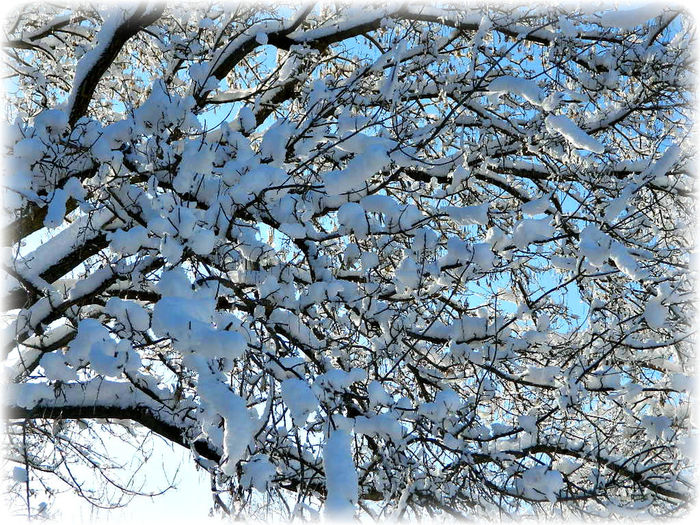 Bare Tree Branch Cold Cold Temperature Frozen Snow Tree Winter Springfield, Nebraska Nebraska