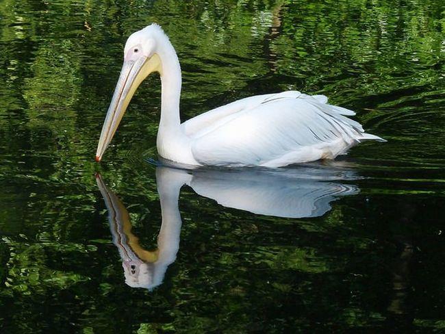 Straubing Tiere Tiergarten Straubing Heikobo