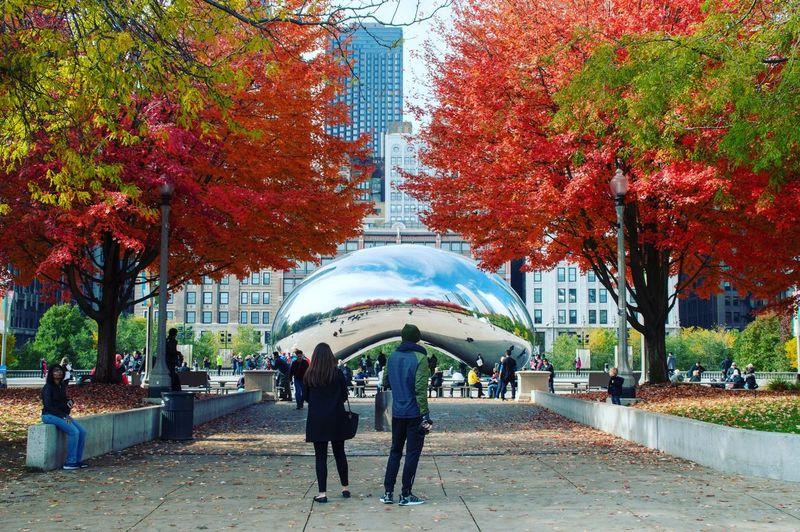 Fall Turning Leaves Leaves Fall Colors Park Bean Art Tree Men Women Architecture