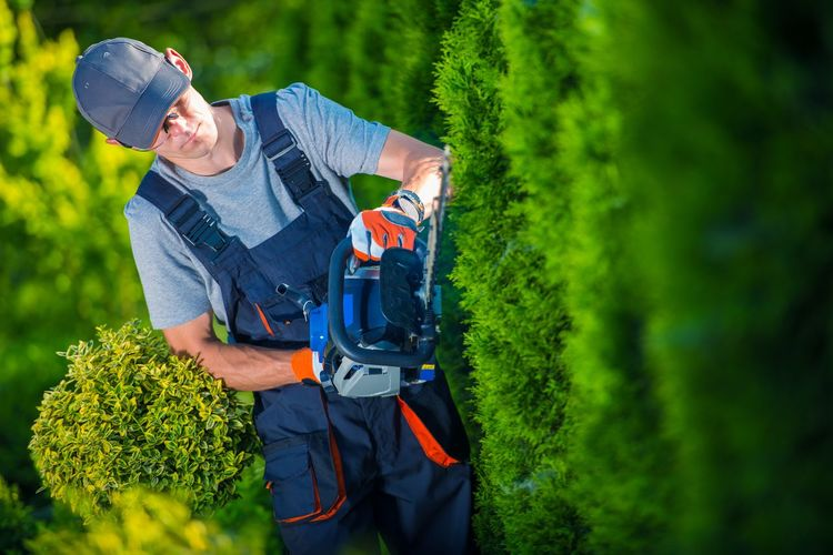 Plants Trimming Works. Gardener with Professional Gasoline Hedge Trimmer at Work. Gardener Adult Adults Only Day Green Color Landscaping Lifestyles Manual Worker Men Nature One Person Outdoors People Protective Glove Protective Workwear Smiling Standing Tree Trimming Trees Working Young Adult