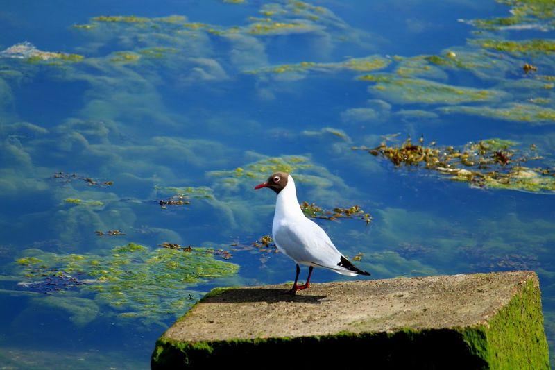 Bird Animal Themes Animals In The Wild Animal Wildlife Vertebrate Animal Water One Animal Perching Lake Nature Day Seagull Beauty In Nature Outdoors Reflection Blue