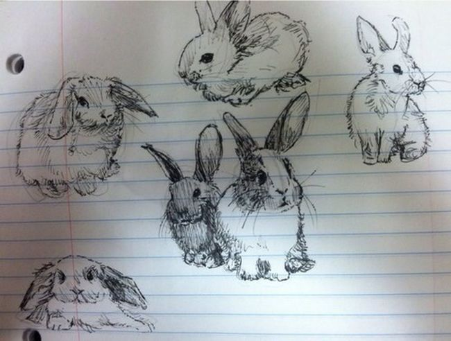 My Art <3 Baby Rabbit Check This Out My Sketch (: