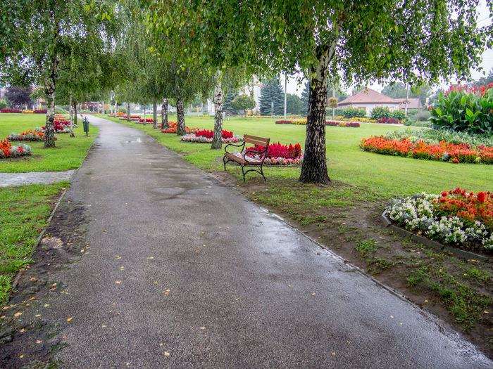 Beauty In Nature Bench Concrete Day Flower Bed Flowers Gardening Grass Growth Nature No People Outdoors Park Park - Man Made Space Rainy Rainy Days Shady Shady Trees Small Town The Way Forward Tree Village Life Walk Wet Wet Road