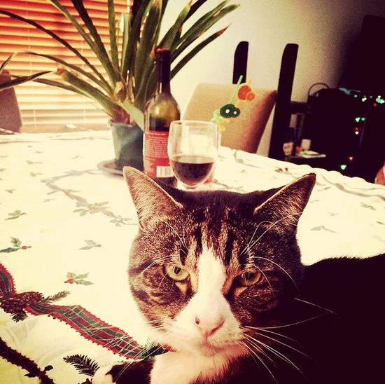 Me And Wine Cat Lovers Catoftheday Drank and My Cat♥ Cat Watching Me
