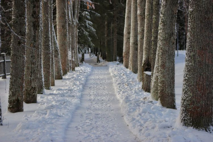 Snow covered road amidst trees in forest during winter