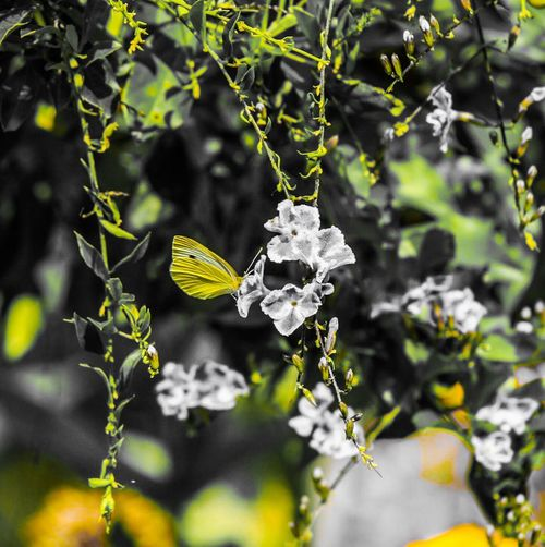 Flower Growth Plant Nature Fragility Beauty In Nature Petal Outdoors Leaf Day No People Freshness Close-up Blooming Flower Head Butterfly Collection Pollination Butterfly