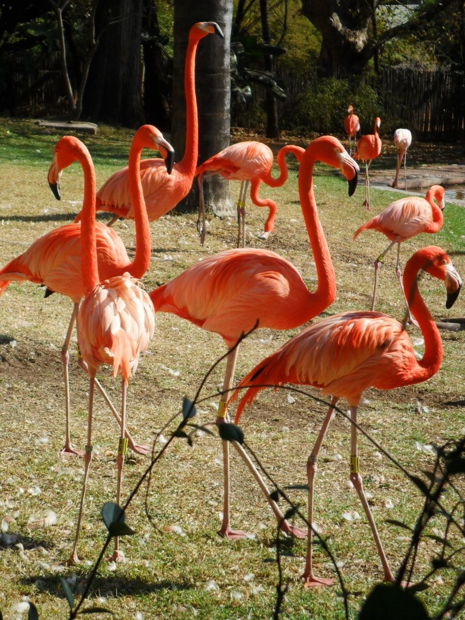flamingo, bird, animals in the wild, animal themes, nature, large group of animals, no people, animal wildlife, colony, day, outdoors, beauty in nature, sunlight, beak, water, full length