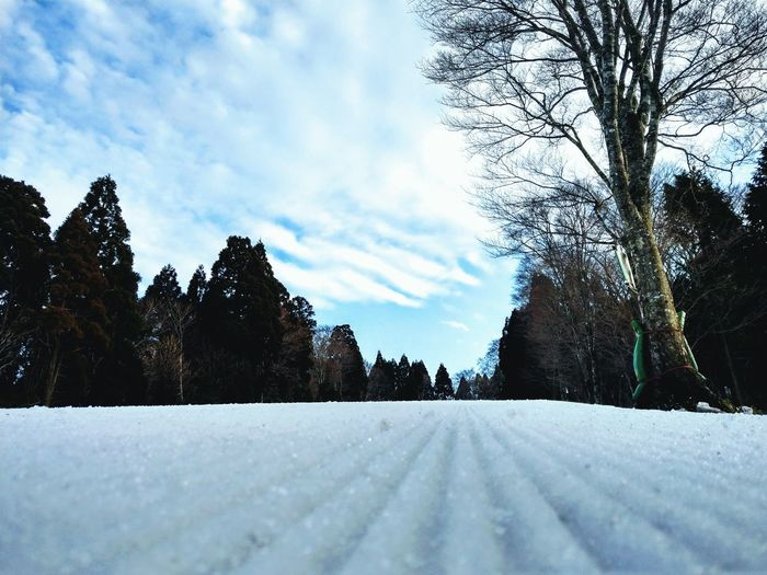 Tree Snow Cold Temperature Snowing Winter Snowdrift Weather White Color Sky Cloud - Sky