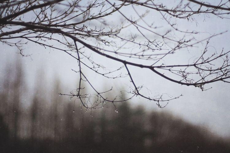 Rainy Days Rain Raindrops Rainy Day Tree Mextures