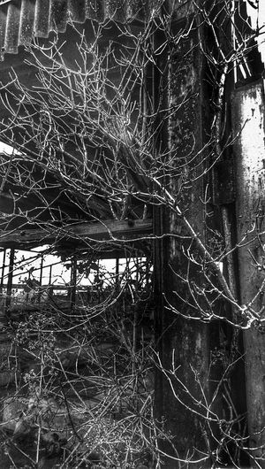 Abandoned Building Nature Vs City Nature Reclaims. EE_Daily: Black And White For The Love Of Black And White Hug A Tree Elder Old Barns