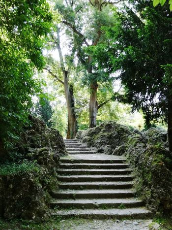 Steps And Staircases Tree Steps Staircase Growth Day Outdoors Nature Green Color No People Italy Grass Green Freshness Tranquil Scene Tree Scenics