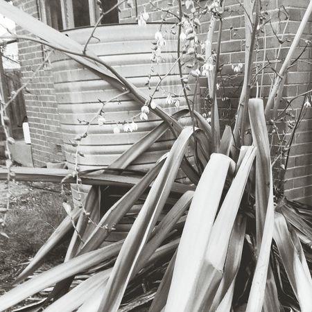 Country Life Garden Photography Succulents Blackandwhite Photography