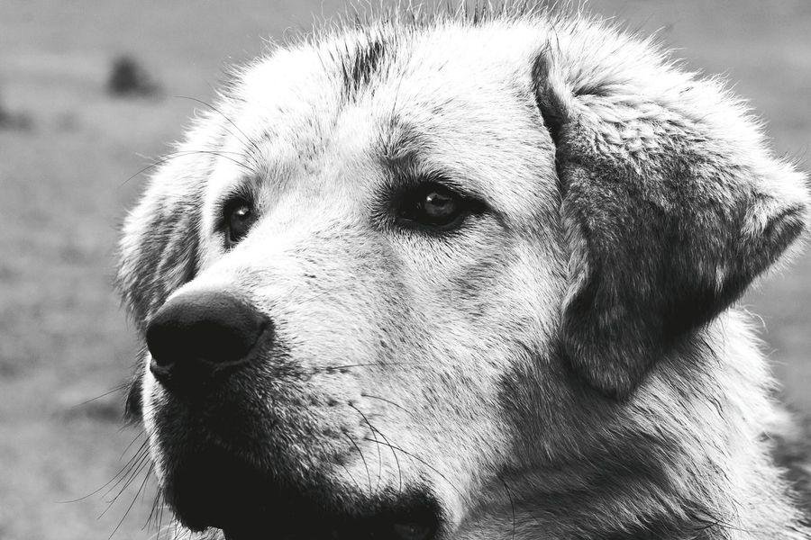 Blackandwhite Photography Dog❤ Royalcanin Canine Love :)