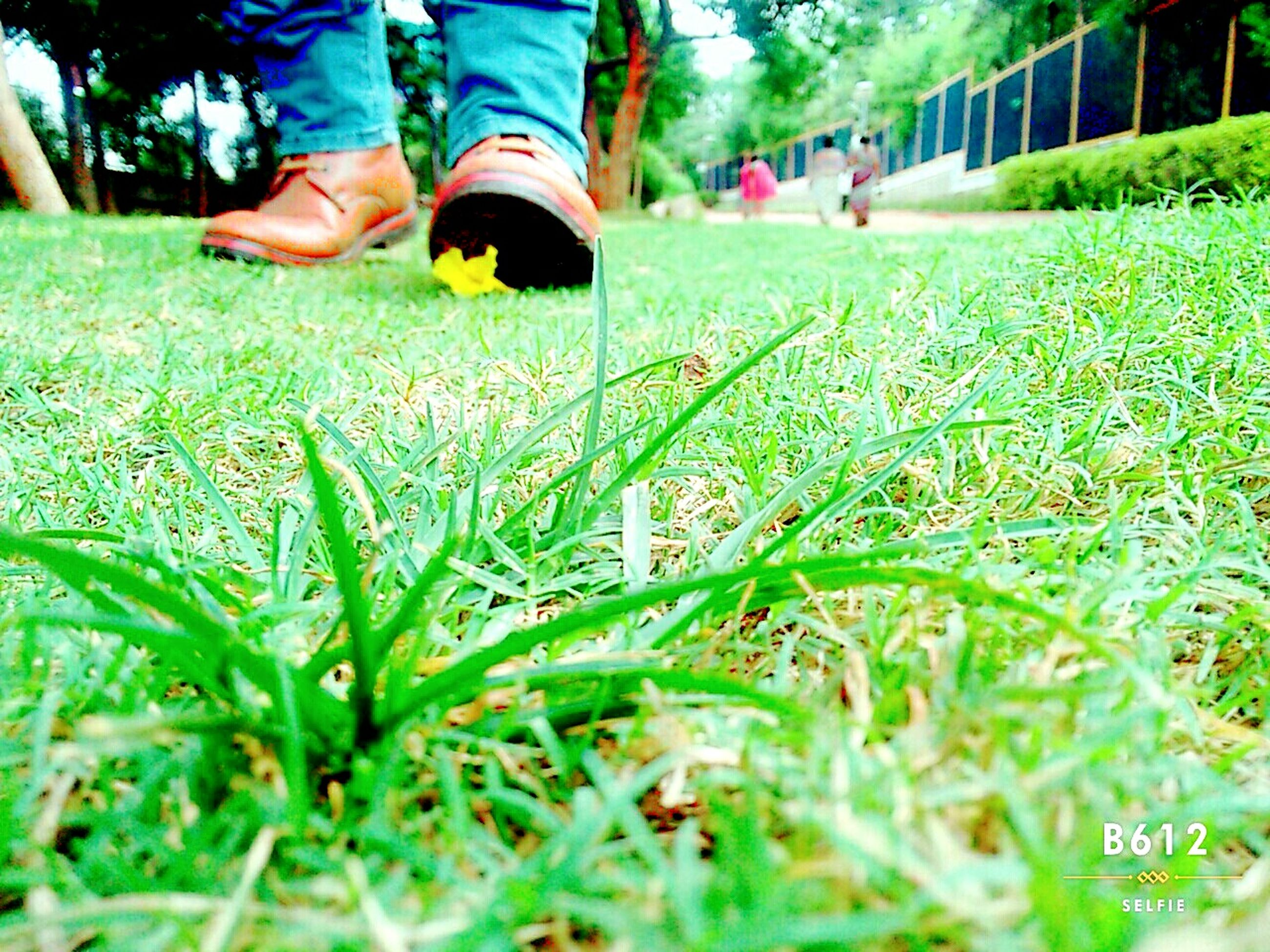 grass, lifestyles, low section, leisure activity, men, field, sport, green color, person, park - man made space, grassy, unrecognizable person, selective focus, playing, focus on foreground